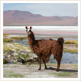 Atacama and Bolivia Holiday