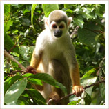 Holiday to Ecuador's Amazon rainforest
