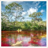 Tours of Caño Cristales