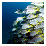 Scuba diving tours in the Galapagos Islands