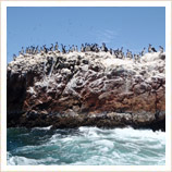 Paracas and the Ballestas Islands
