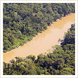 Amazon rainforest on your Iguazu Falls holidays