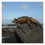 Holidays in Peru and Galapagos Islands